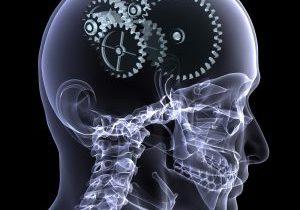 brain-300x300